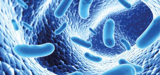 Palavras Cruzadas - Probióticos